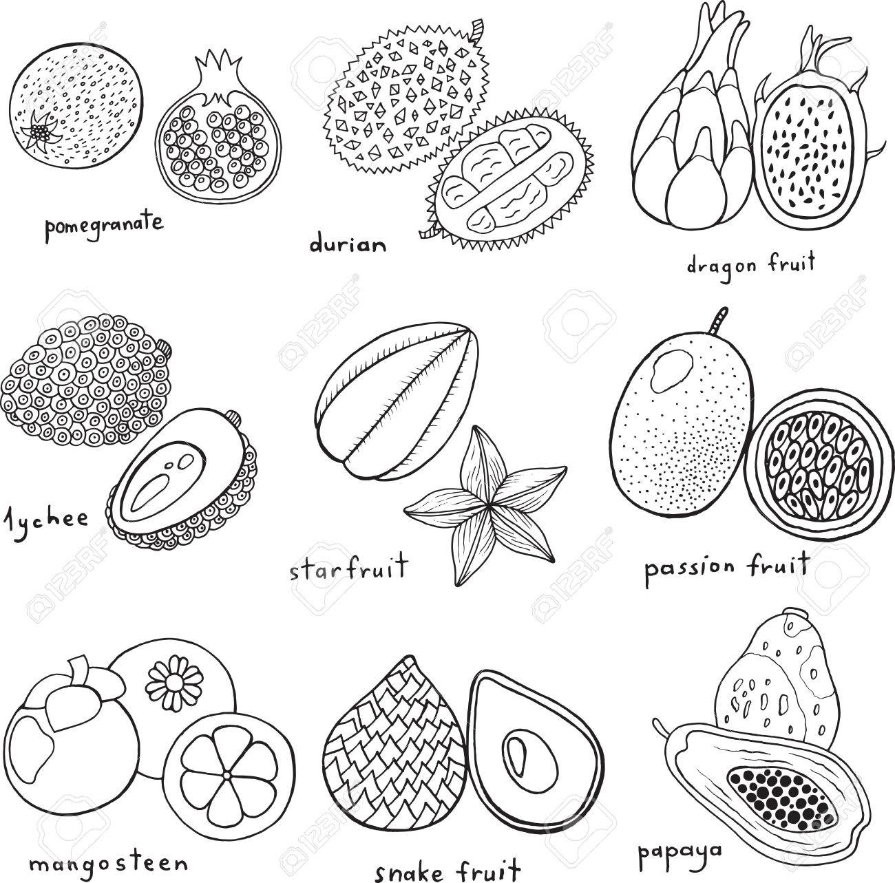 Black and white hand drawn set with tropical exotic fruits vector art monochrome coloring page