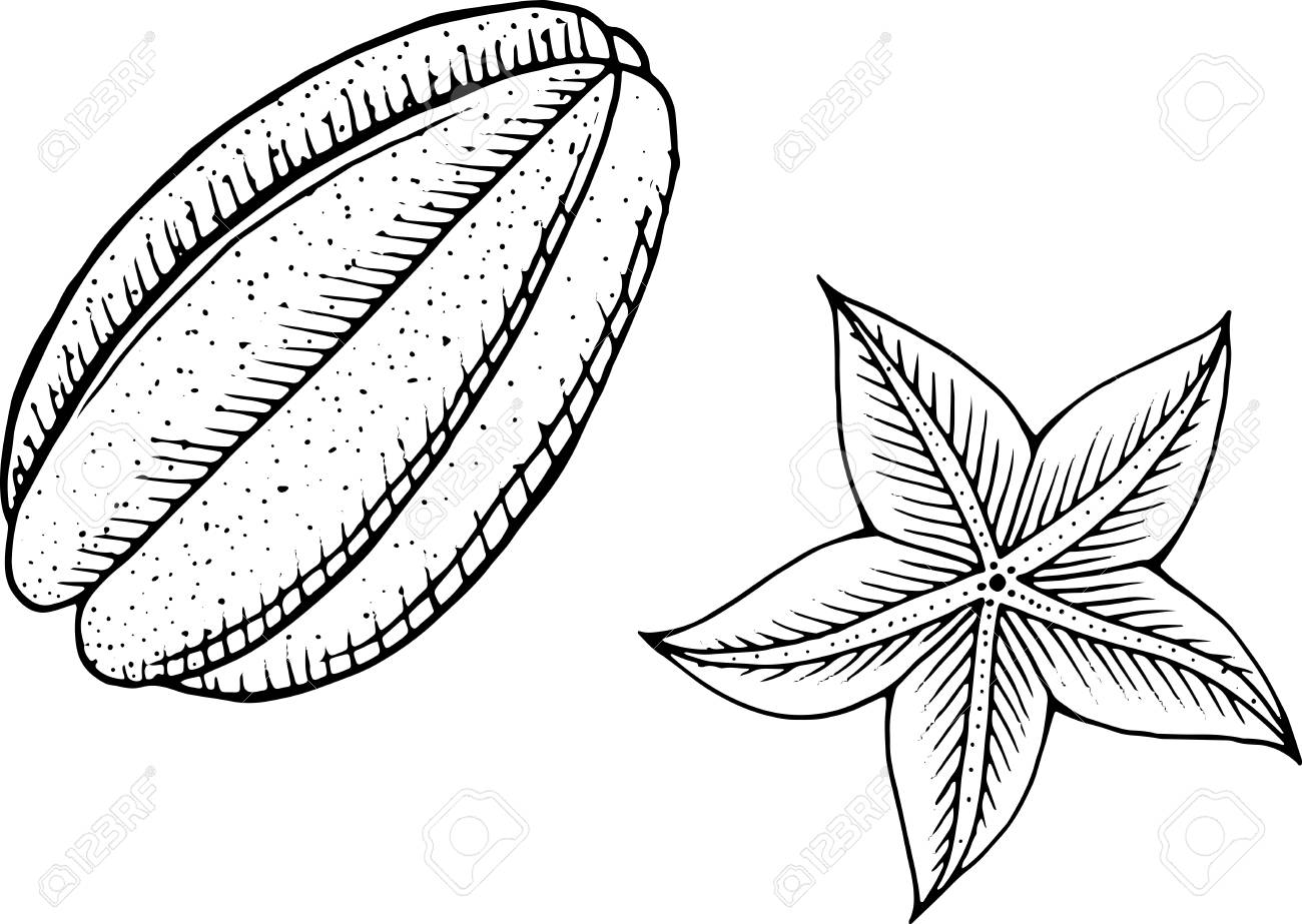Starfruit coloring page line art for coloring books for adults tropical and exotic fruit