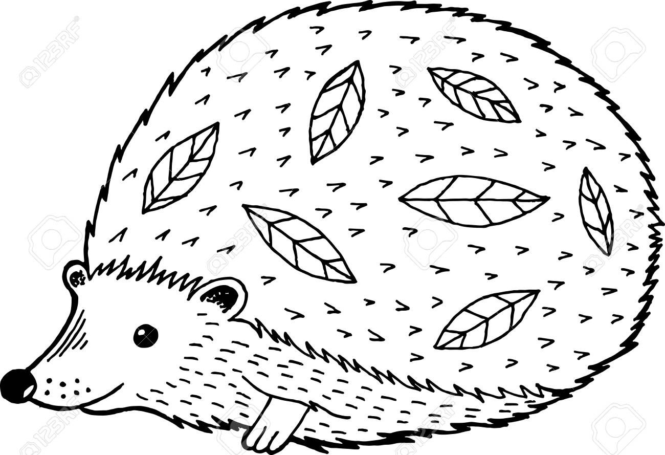Cartoon Hedgehog Coloring Page For Adults And Kids Vector
