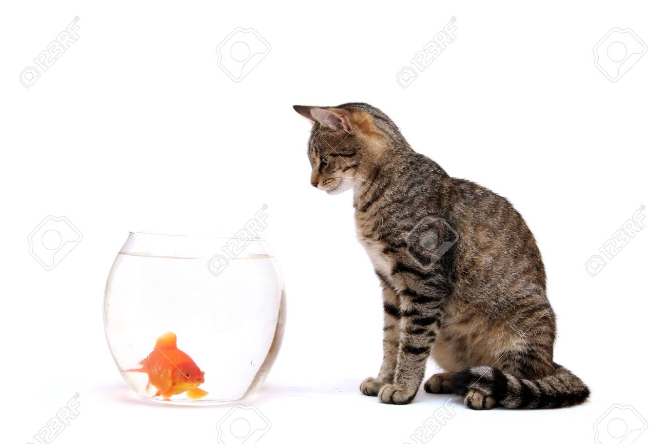 Home cat and a gold fish Stock Photo - 5867143