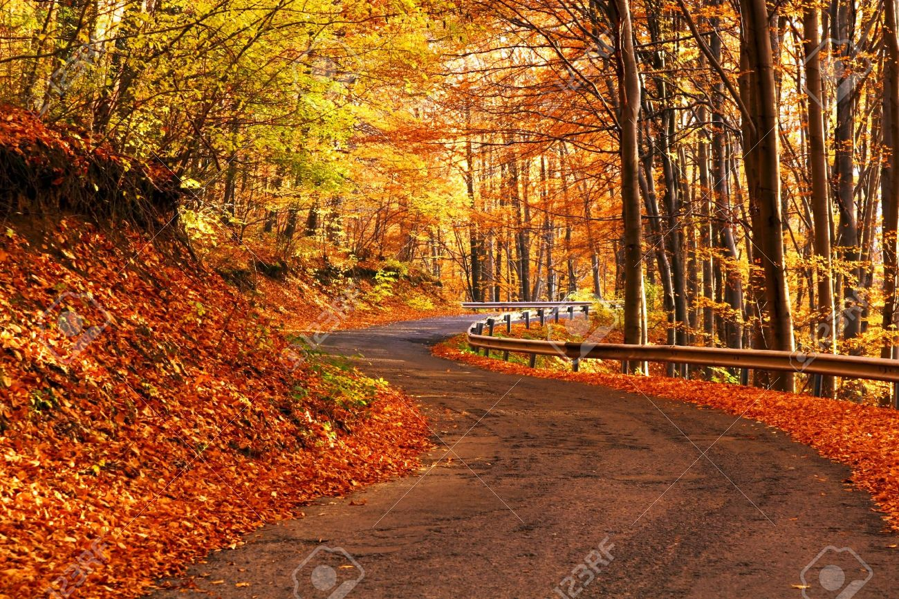Autumn scene at the forest Stock Photo - 5897389