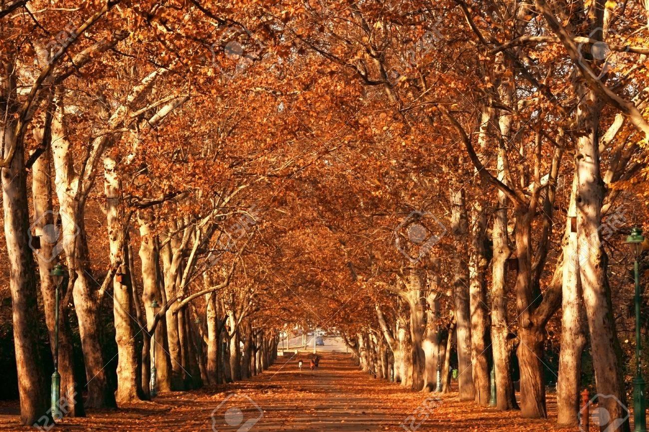 autumn in the park Stock Photo - 5867250