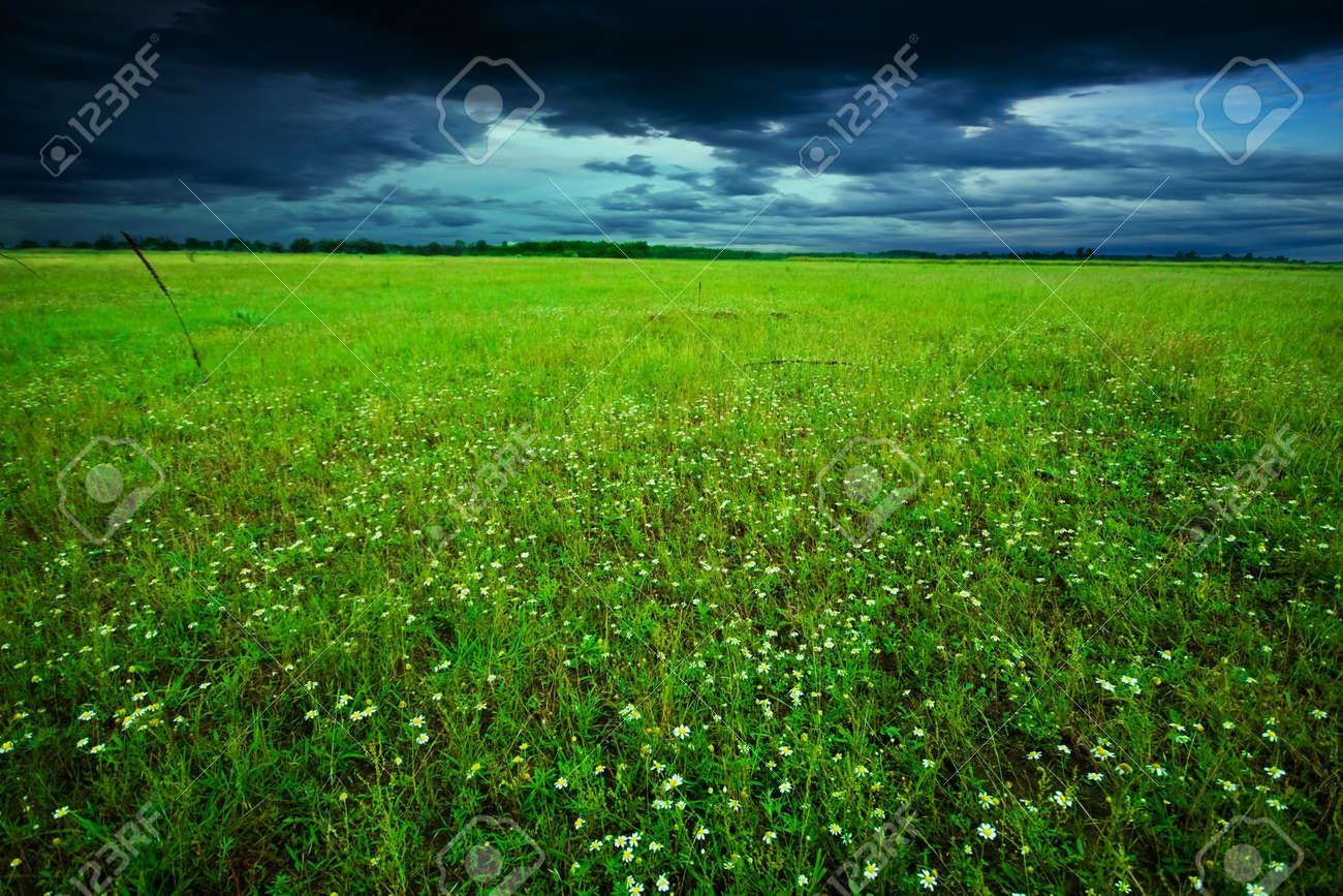 Green field in summer Stock Photo - 6831767