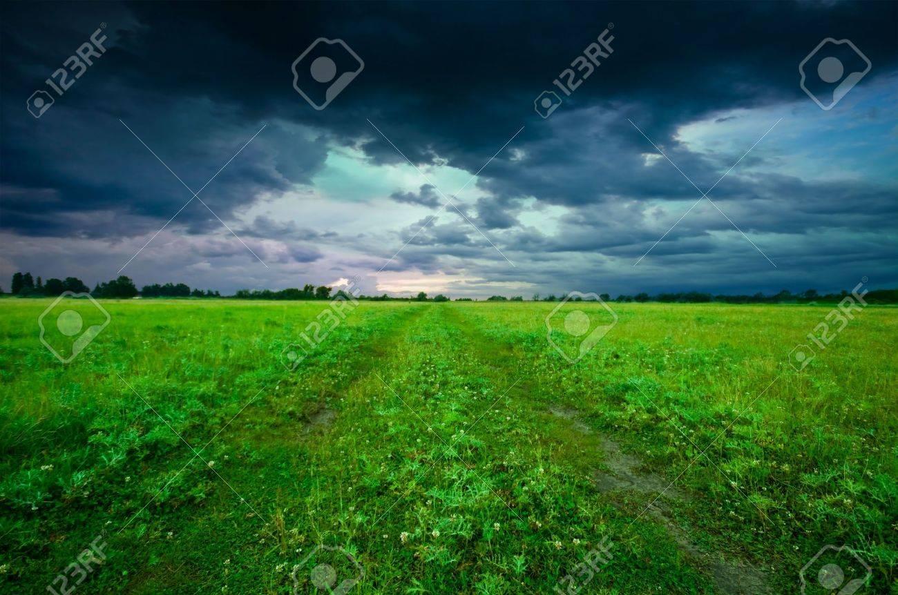 Green field in summer Stock Photo - 6831724