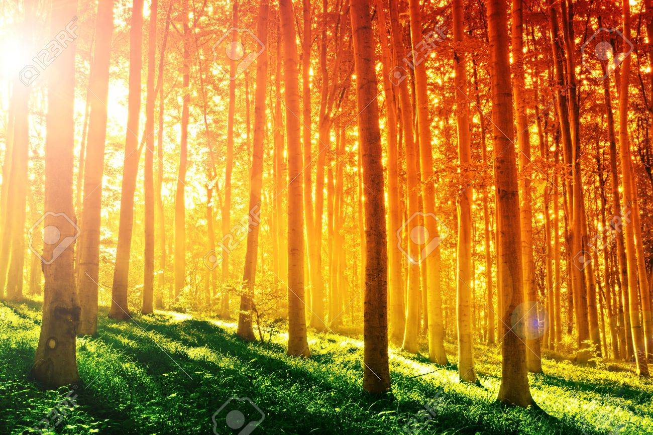 Colorful mystical forest with sun ray at morning Stock Photo - 8752332