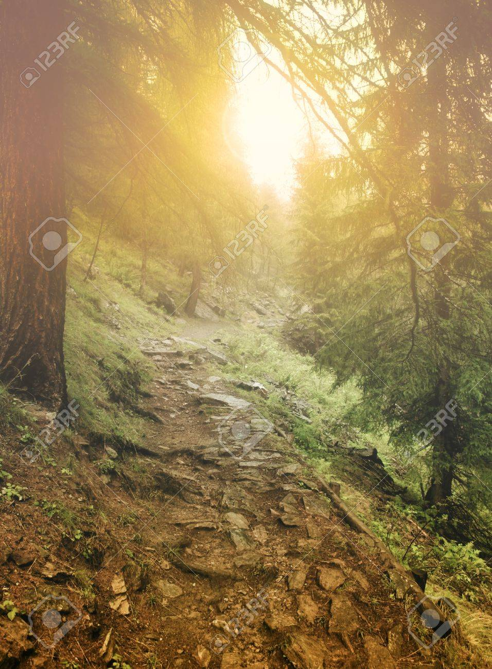 Mystic forest Stock Photo - 9279947