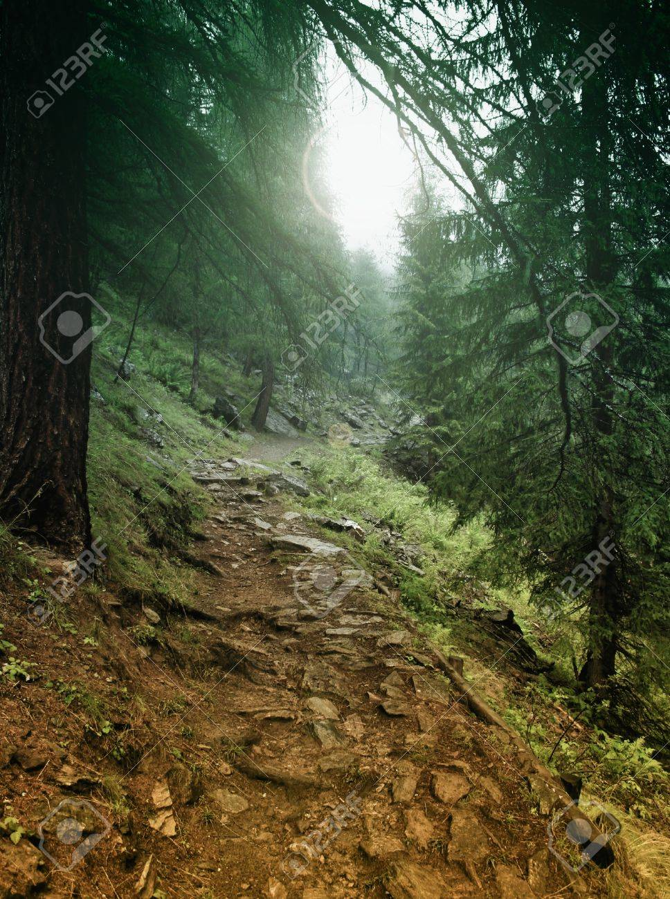 Mystic forest Stock Photo - 9279951