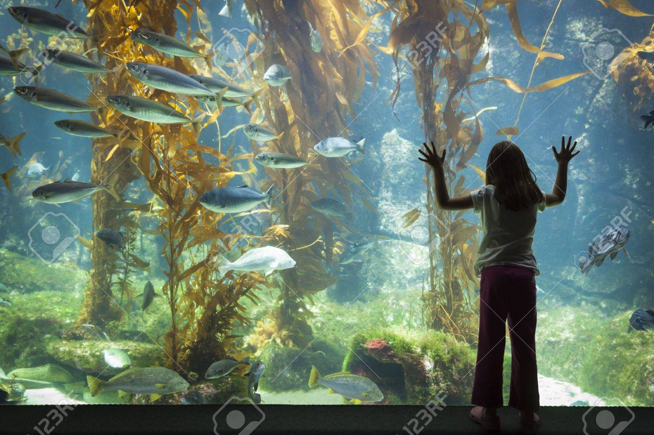 Amazed Young Girl Standing Up Against Large Aquarium Observation Glass. Stock Photo - 20145648