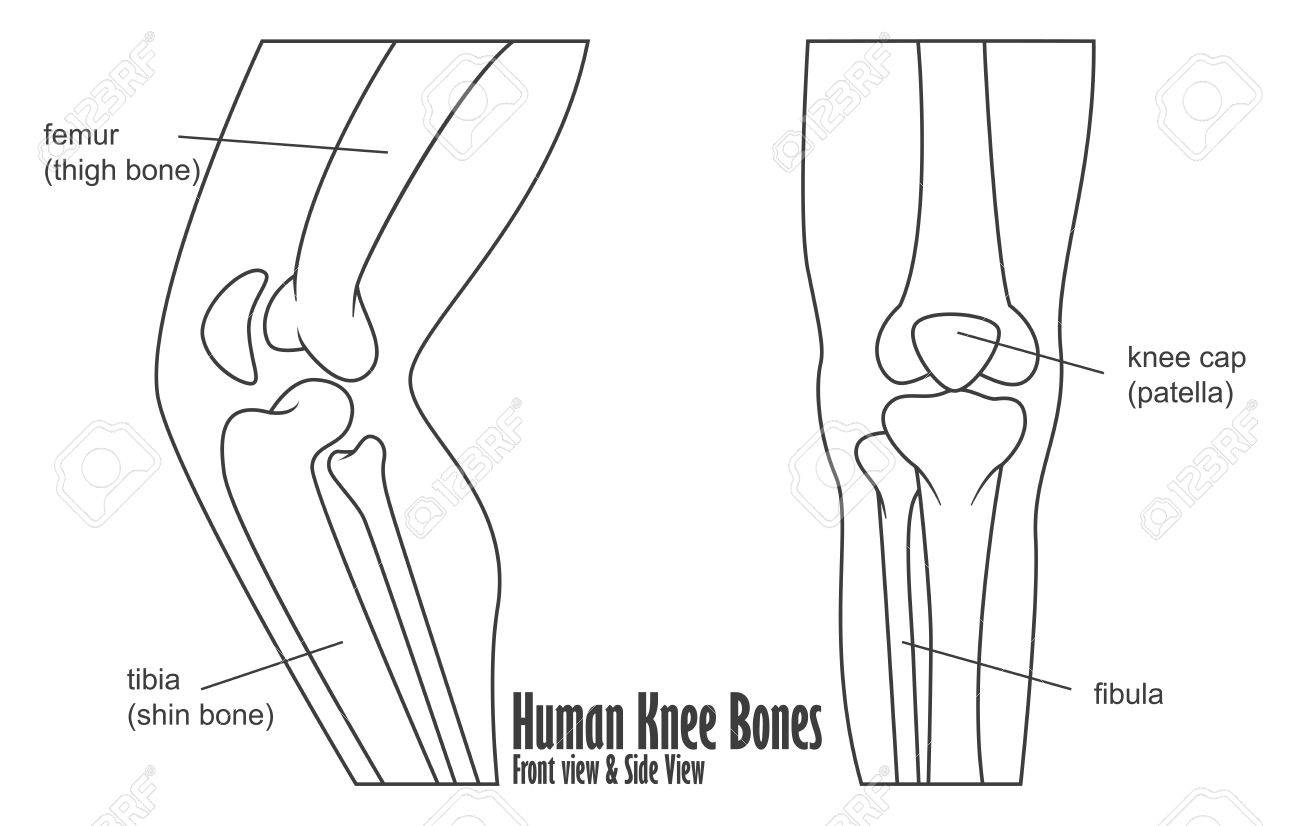 Human Knee Bones Front And Side View Anatomy Royalty Free Cliparts ...