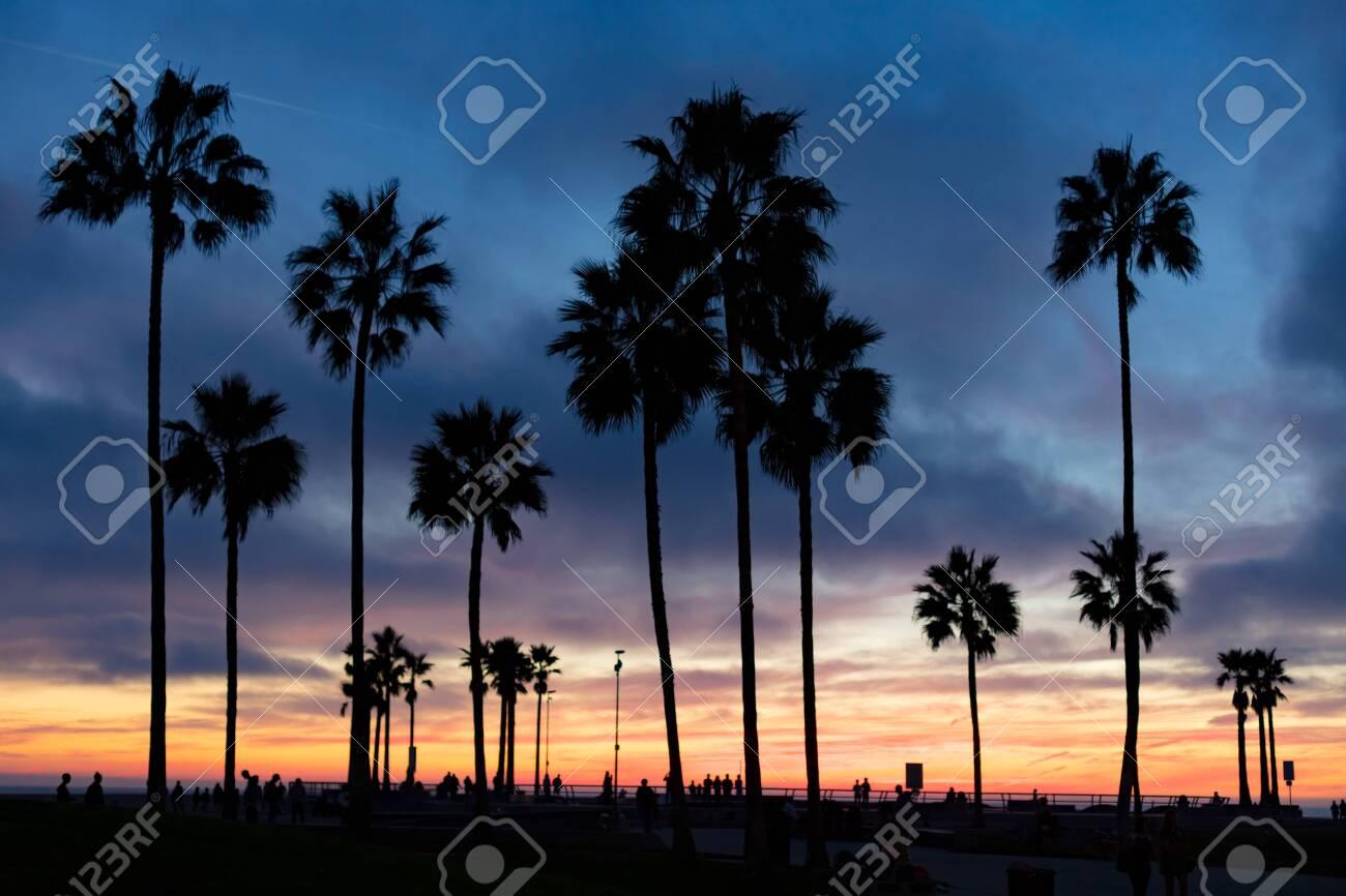 Venice Beach Sunset in Los Angeles USA - 134311557