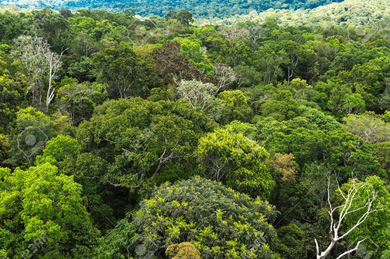 Selva amazónica en la mira de Bolsonaro
