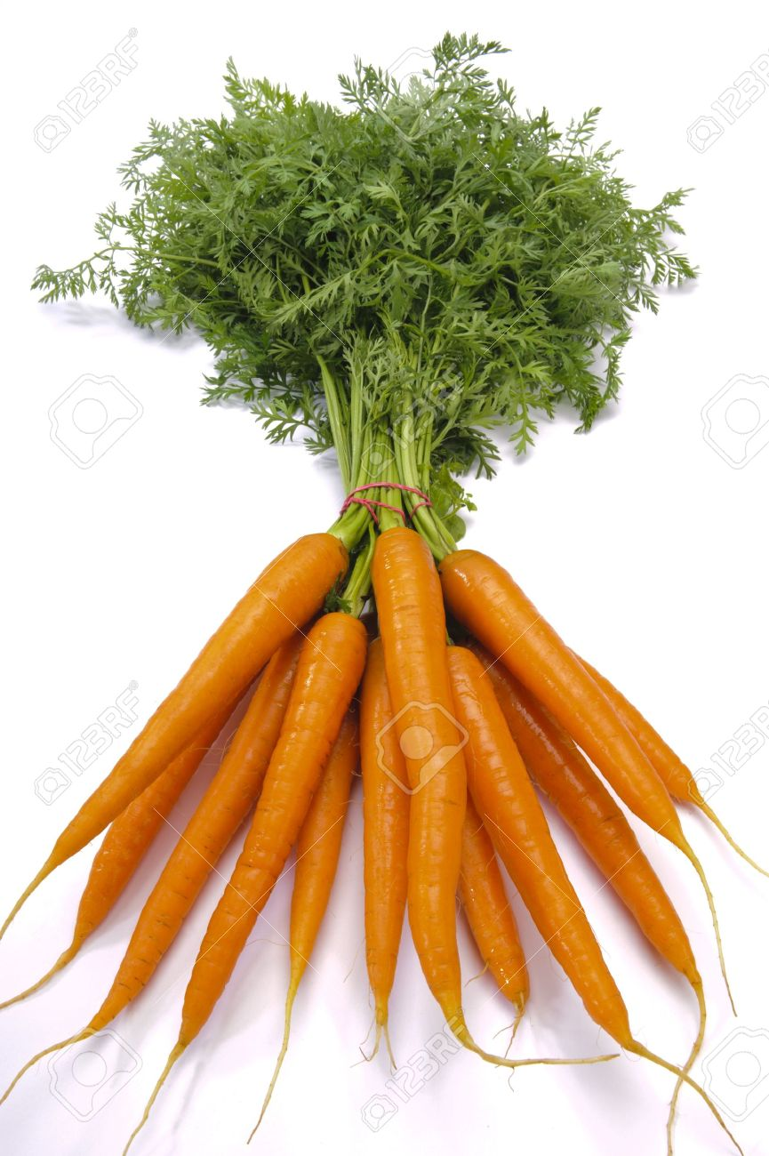 bundle of carrots Stock Photo - 10506556