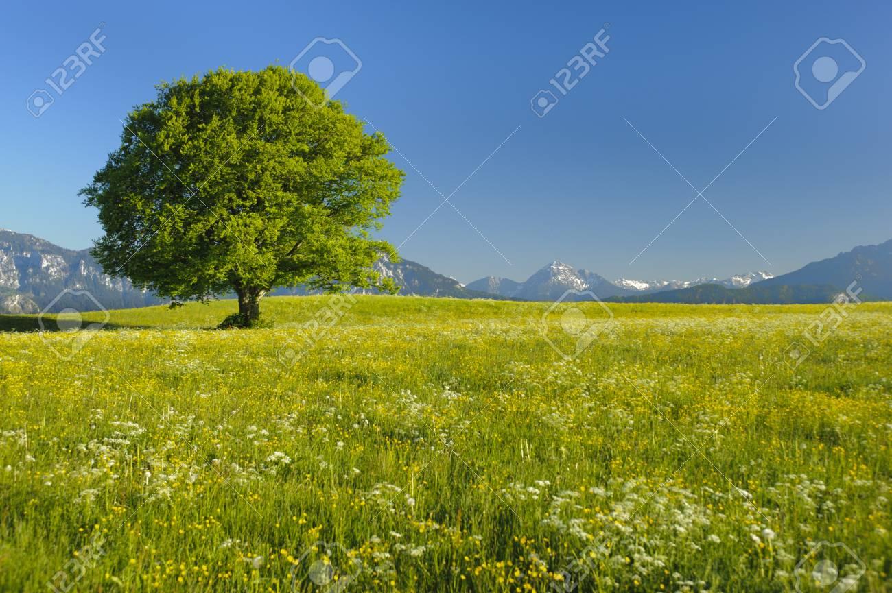 single tree at spring - 12674575