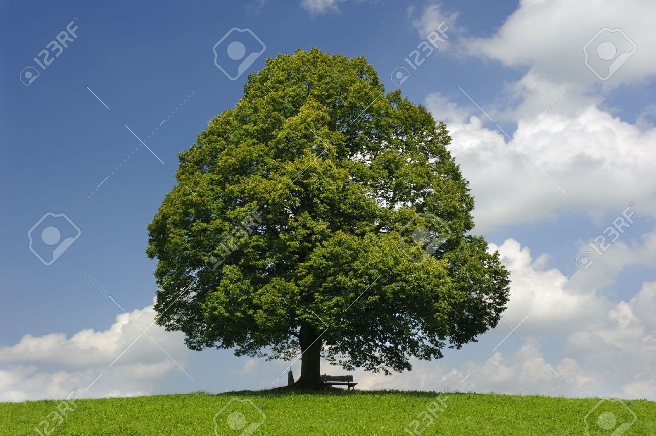 single tree at spring Stock Photo - 12674611