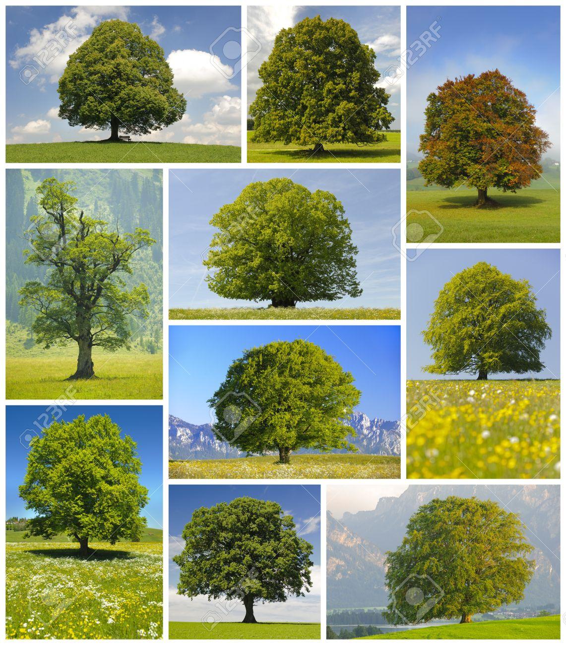 Collage De Grandes árboles Fotos, Retratos, Imágenes Y Fotografía ...