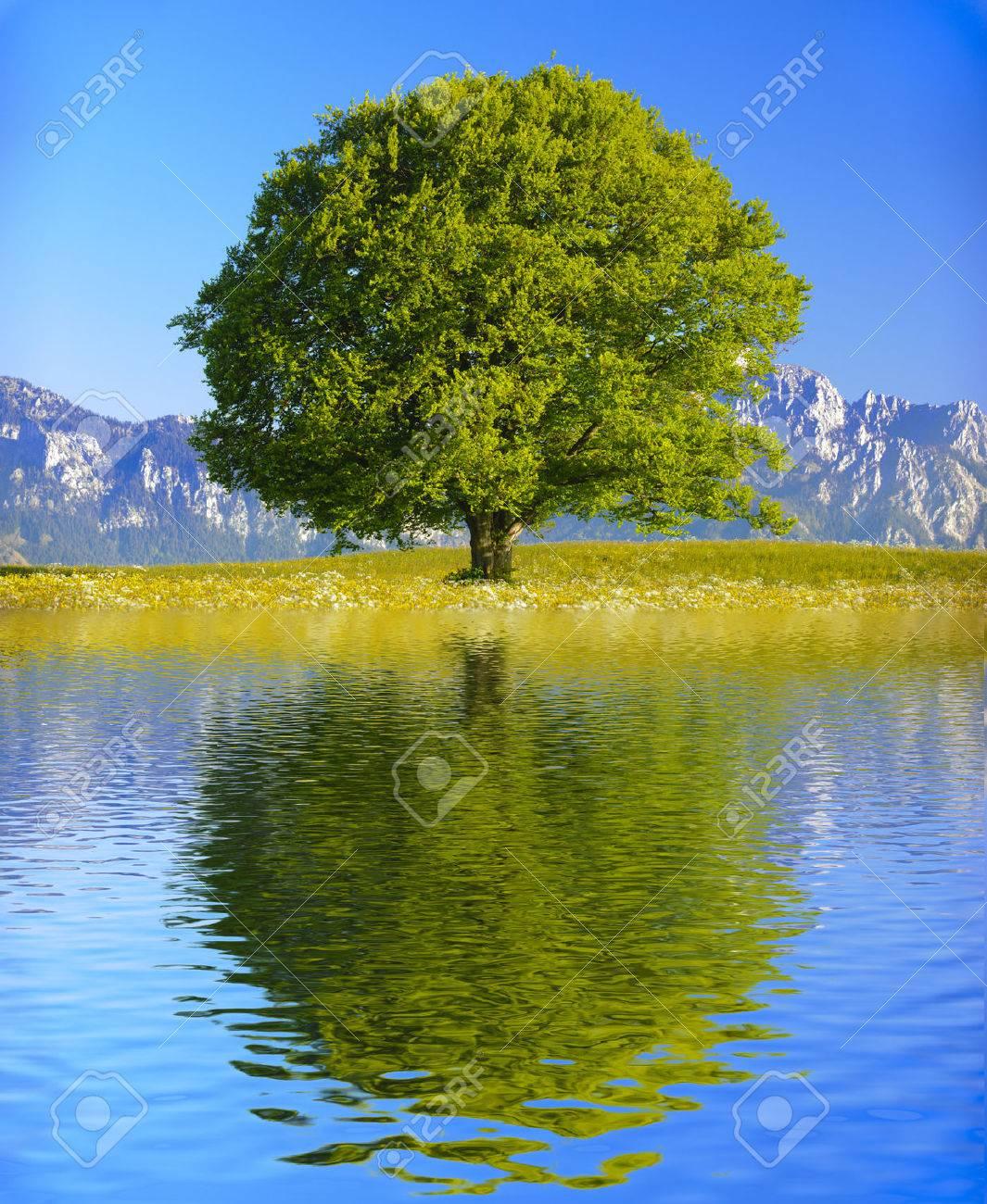 single big old tree mirroring on water surface - 36471071