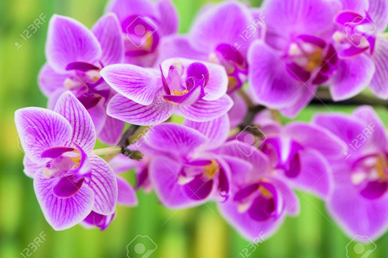 Jardin Zen Japonais Avec Le Feng Shui Et De Fleur D Orchidee Banque