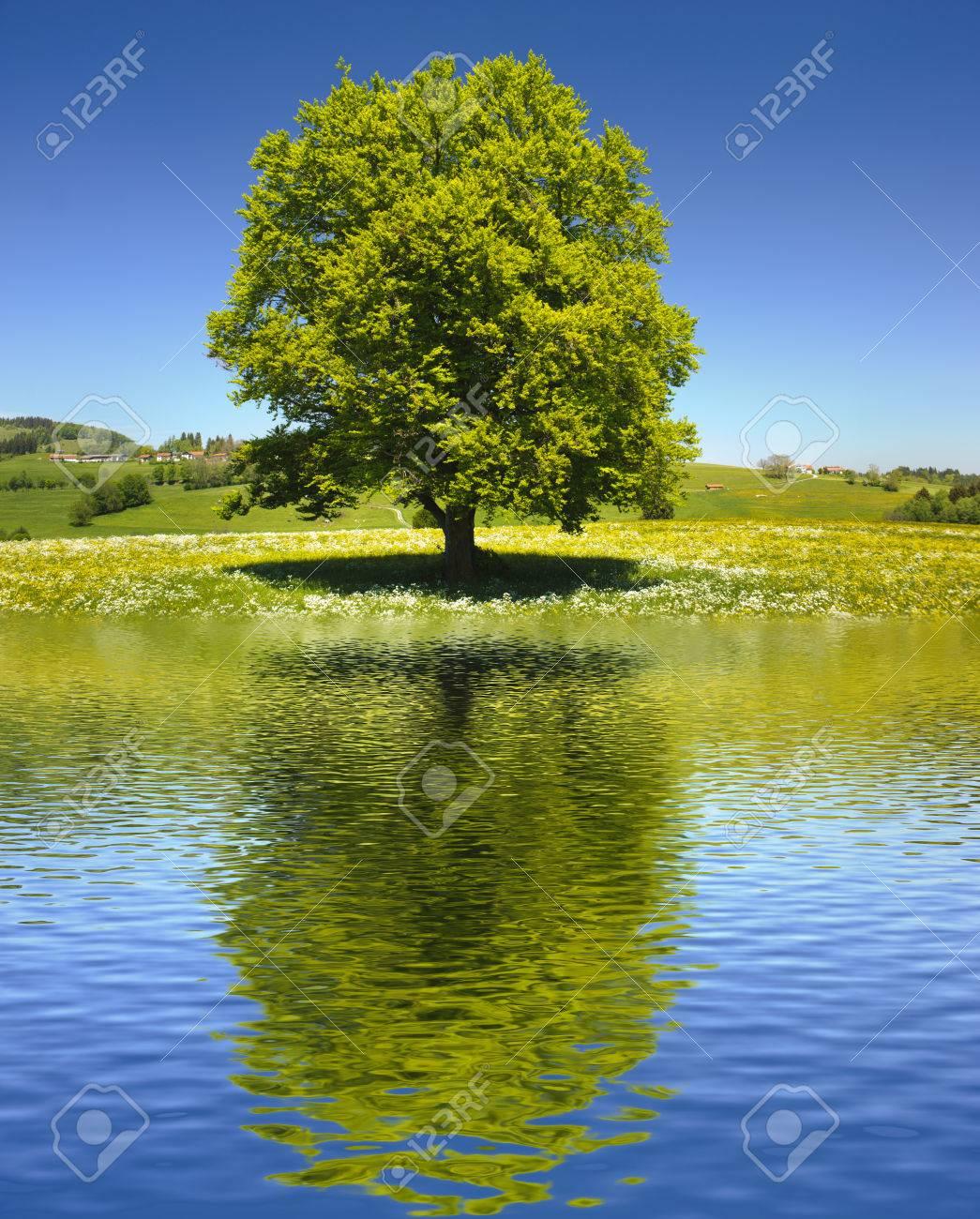single big old tree mirroring on water surface - 60721050