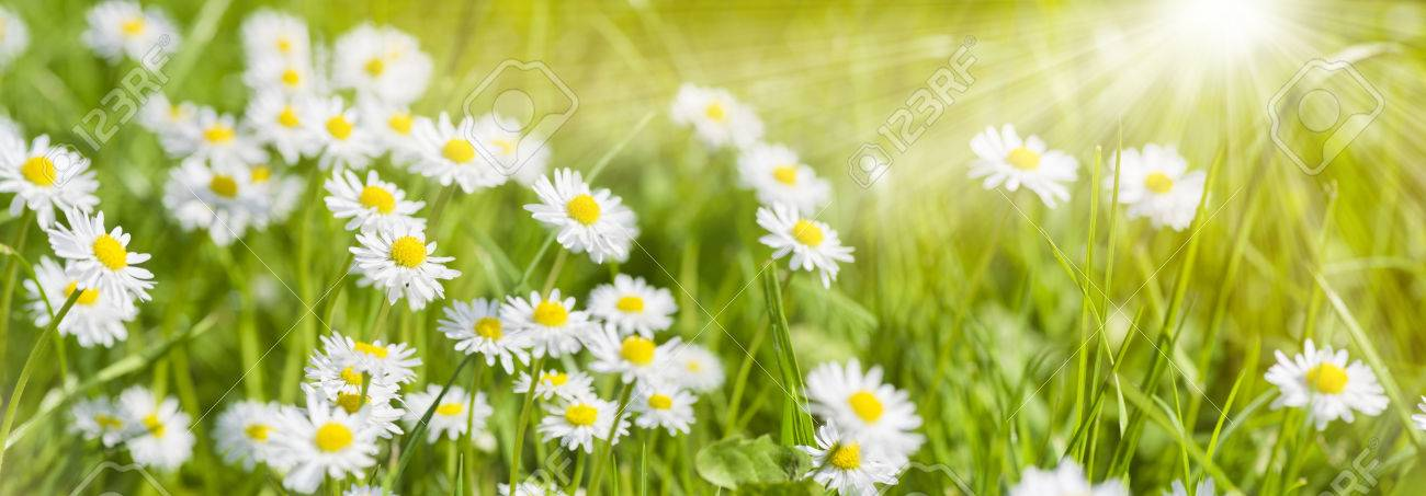 spring meadow with beautiful flowers and sun rays in background - 73496071