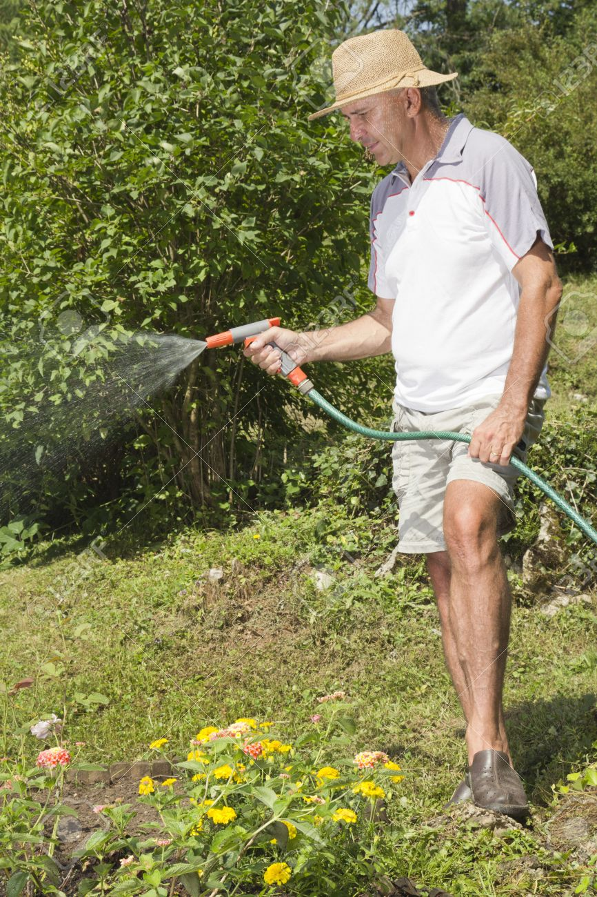 Mid age man watering the garden with hose Stock Photo - 14680367