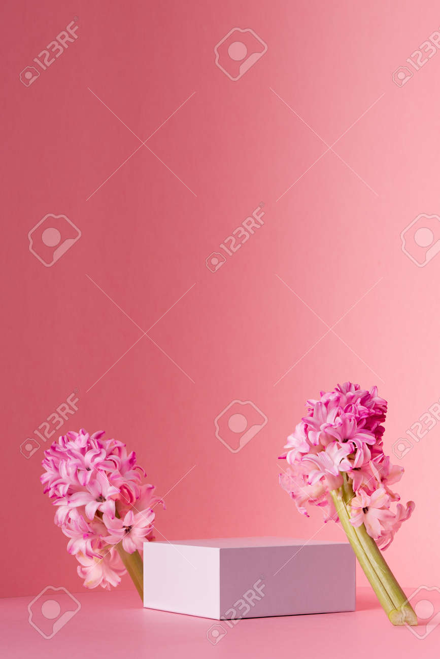 White square podium for display cosmetic, products with spring hyacinth flowers standing in sunlight on gradient pastel pink background, vertical. - 168468971