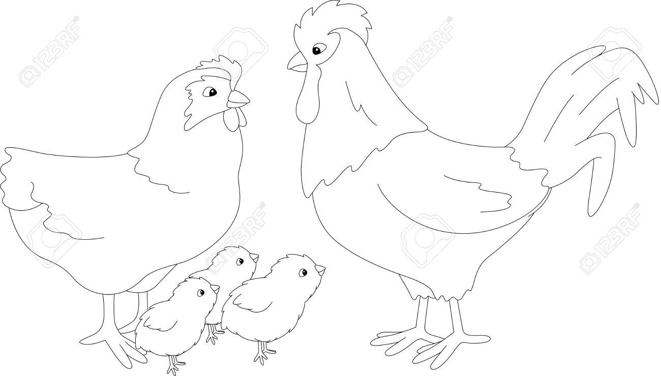 Conjunto De Gallo Gallina Y Los Pollitos Ilustración Vectorial Para Los Niños Libro De Colorear