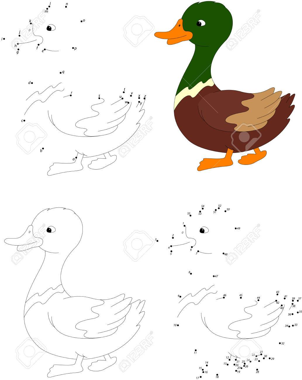 Cartoon Duck. Coloring Book And Dot To Dot Educational Game For ...