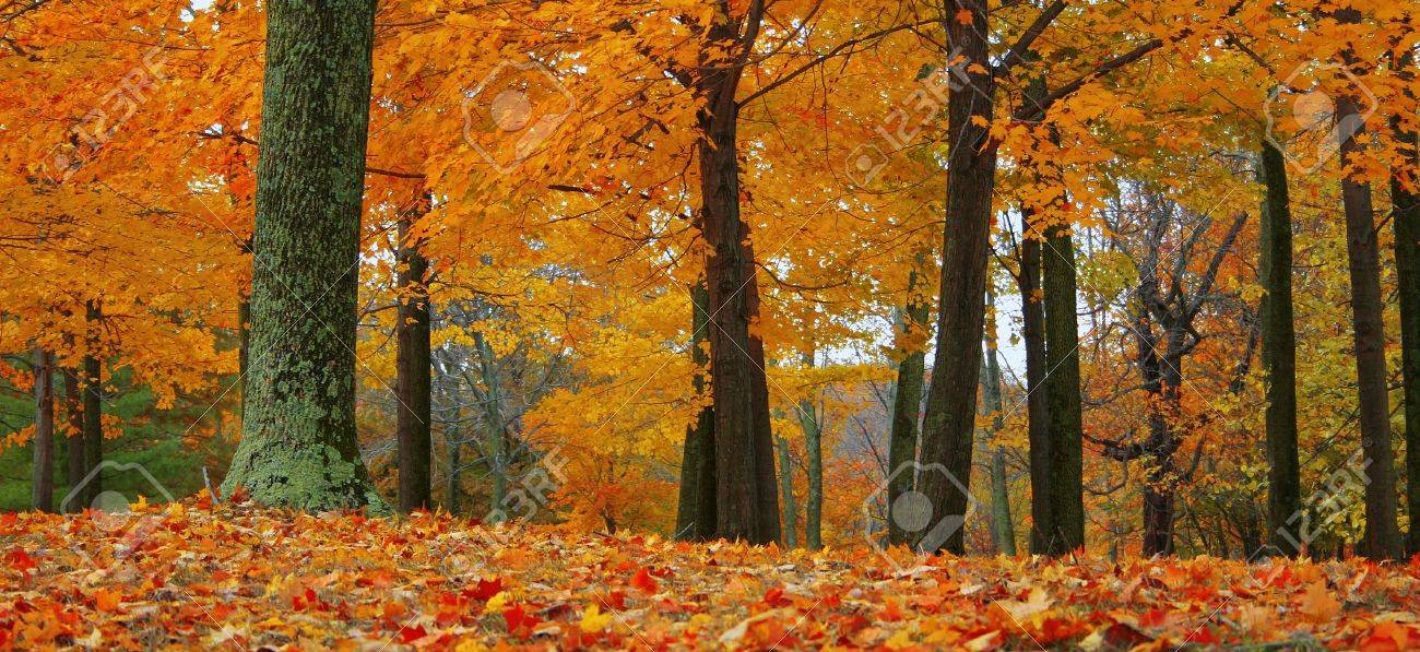 Add fiery warmth to any project with this autumn scene. Stock Photo - 611325