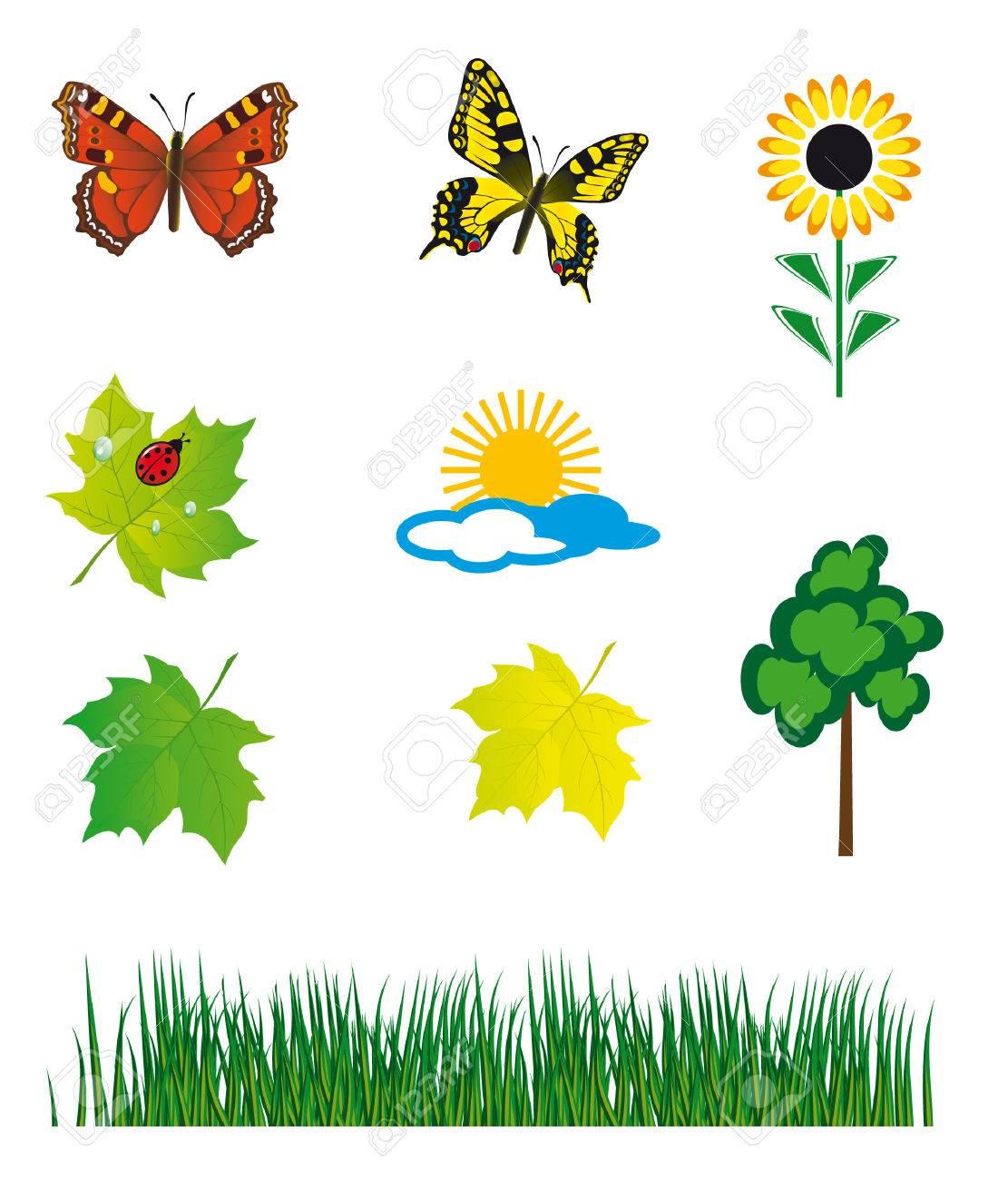 Set of natural elements for design. illustration Stock Vector - 8133642