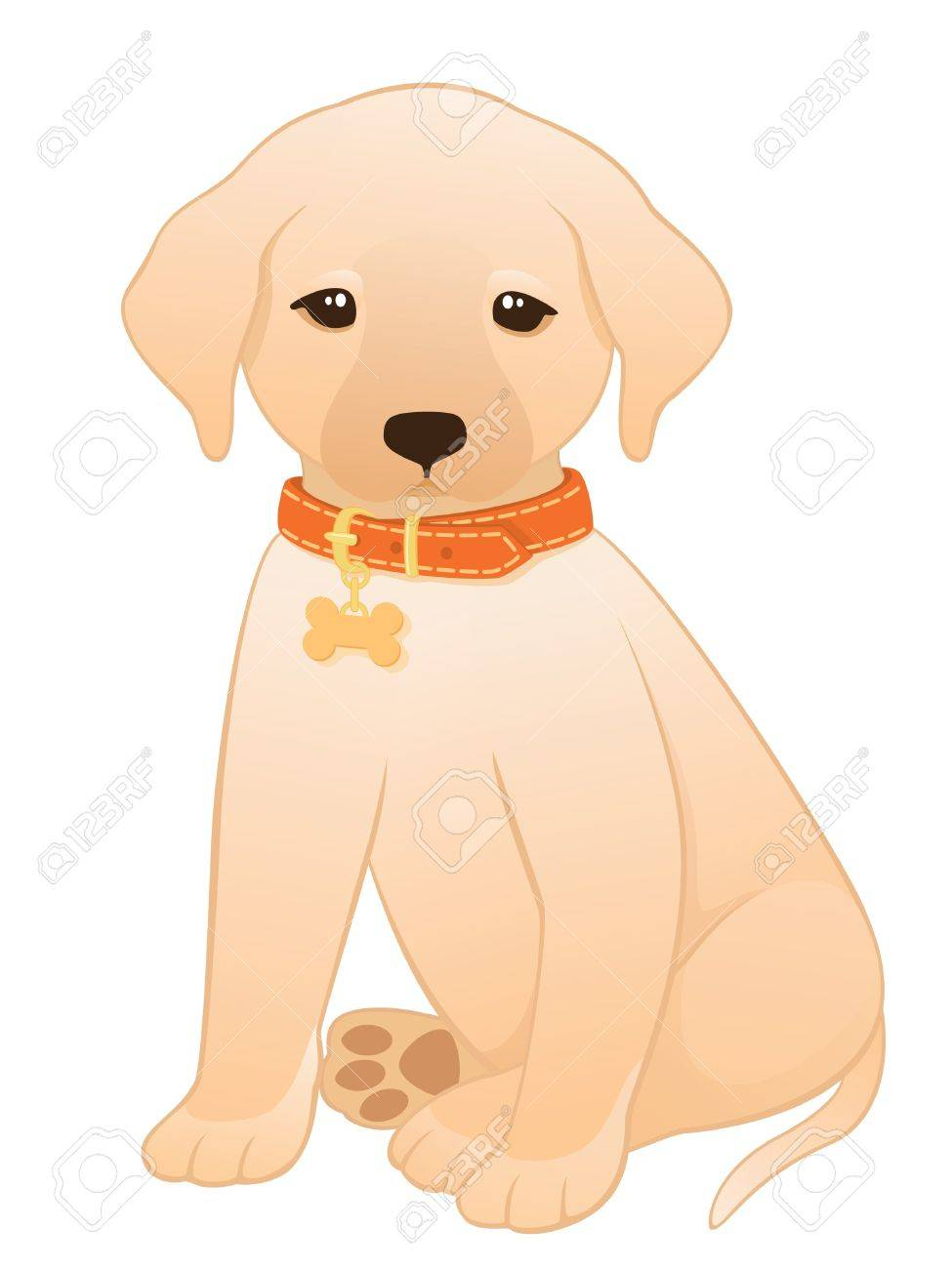 Vector illustration of a little labrador retriever puppy wearing an orange collar with a dog tag. Stock Vector - 9642443