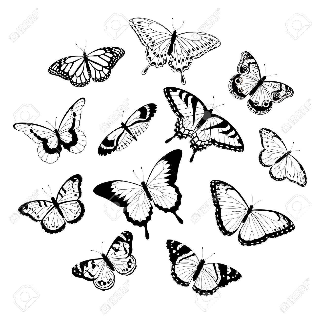 collection of black and white butterflies isolated on white