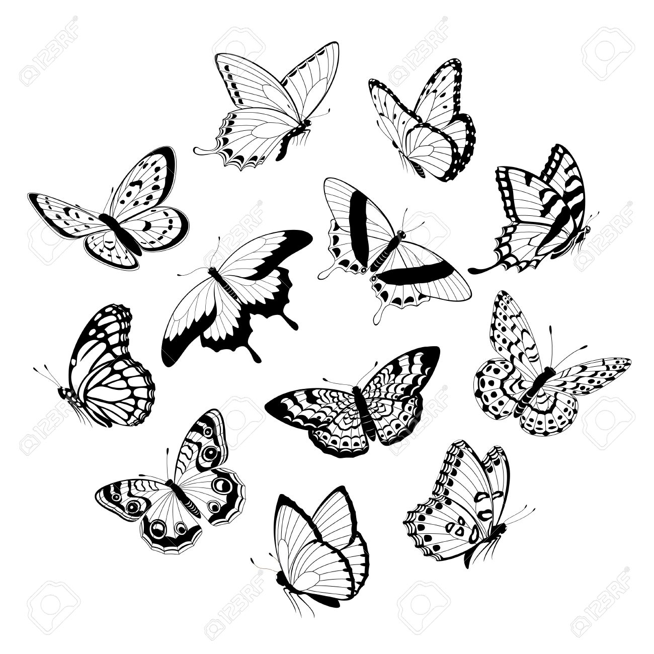 Dongetrabi Black And White Butterfly Drawing Images