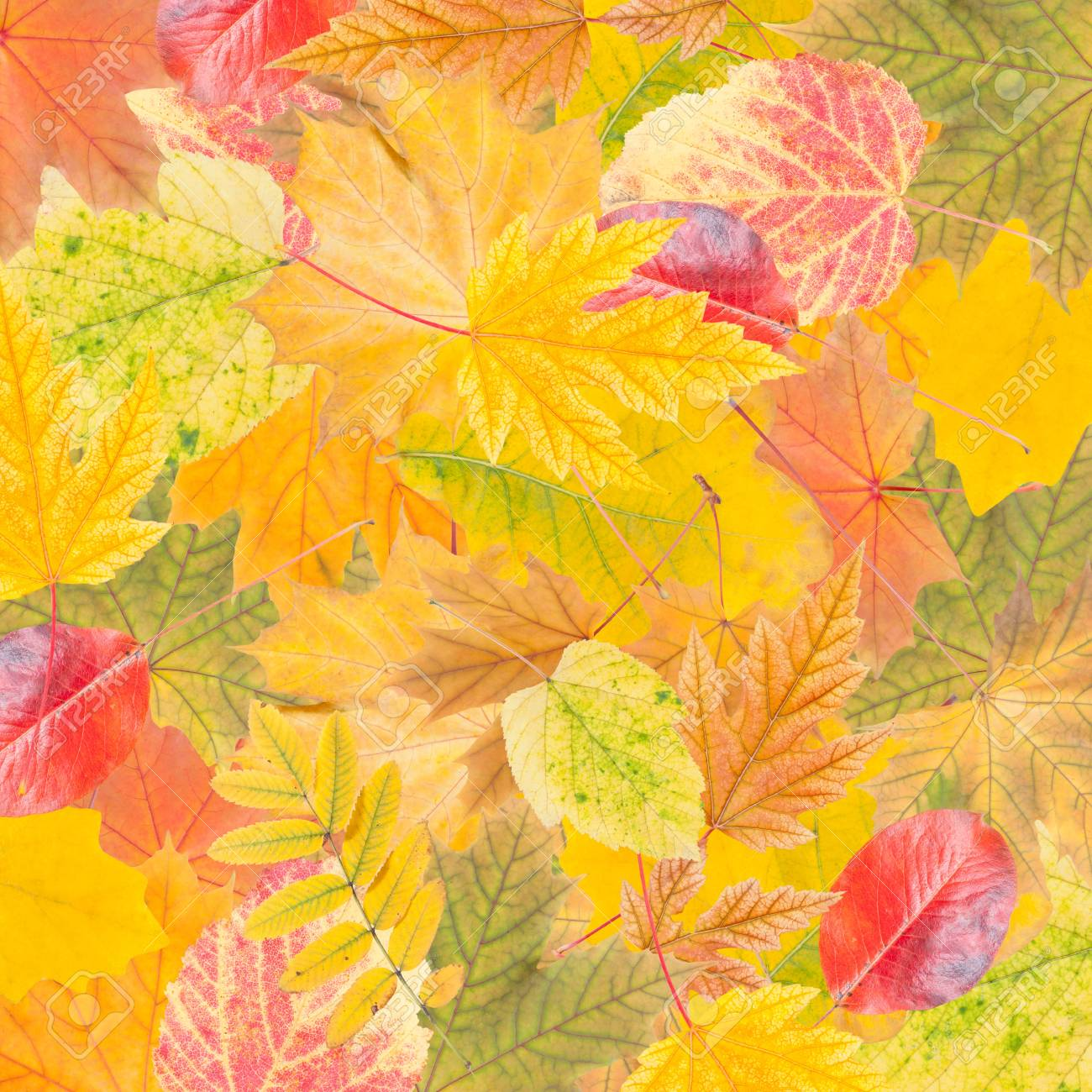 Autumn wallpaper with bright leaves for design, foliage background Stock Photo - 21994577