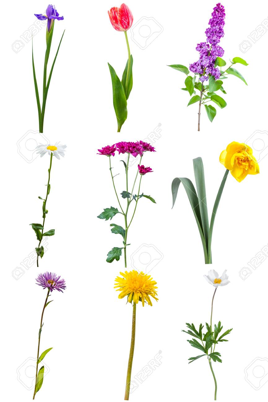 Different beautiful flowers isolated on white background stock photo different beautiful flowers isolated on white background stock photo 34033225 izmirmasajfo
