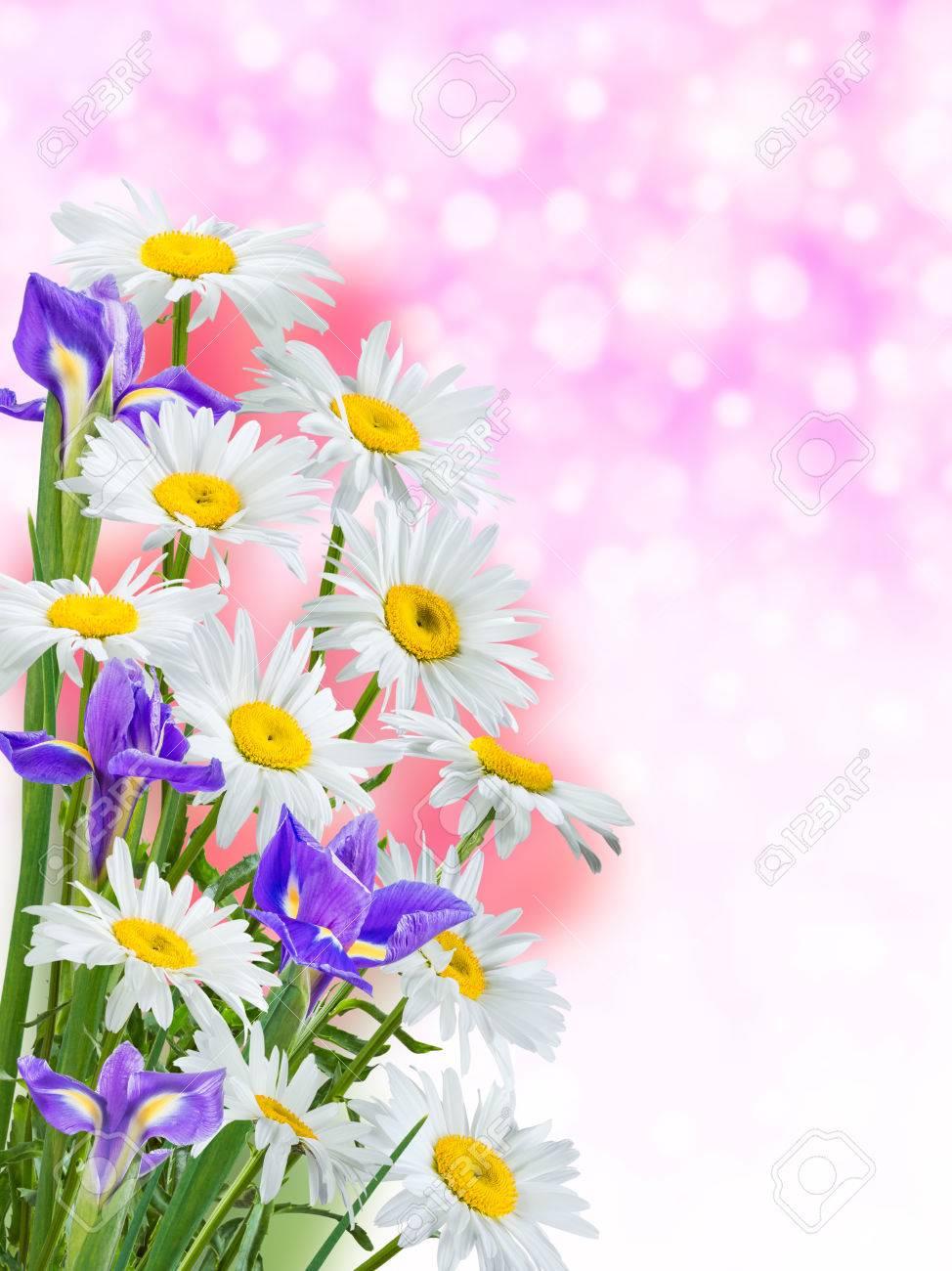 la naturaleza de fondo con flores preciosas foto de archivo 35027563 - Fotos De Flores Preciosas