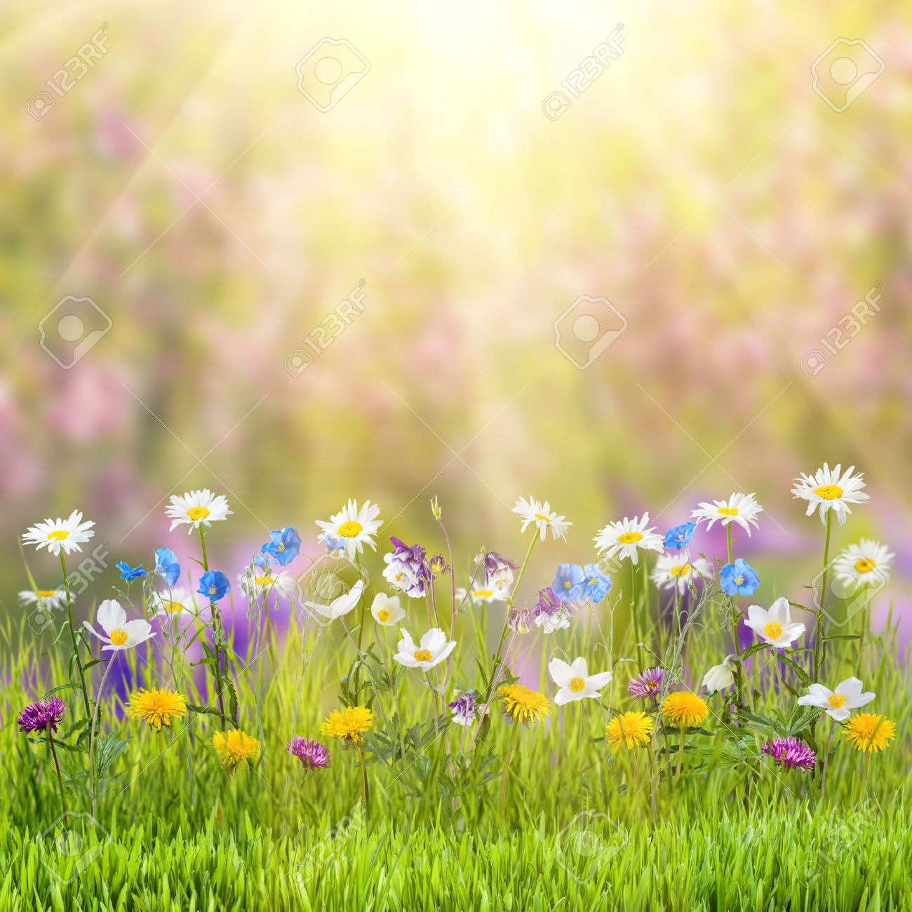Schöner Frühling Blumenwiese Mit Wildblumen Lizenzfreie Fotos