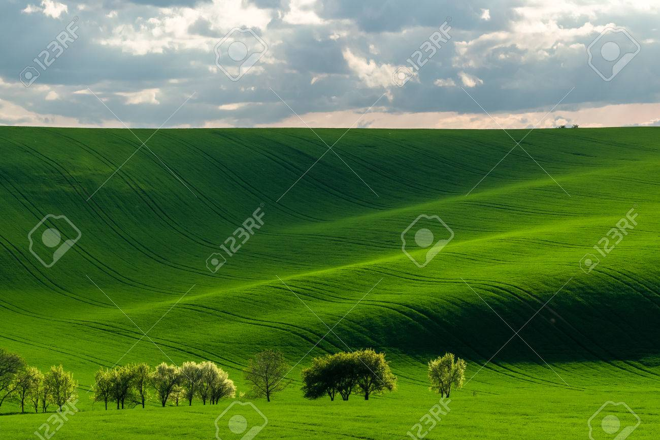 Green hills in the rays of evening sun, agricultural landscape - 43418116