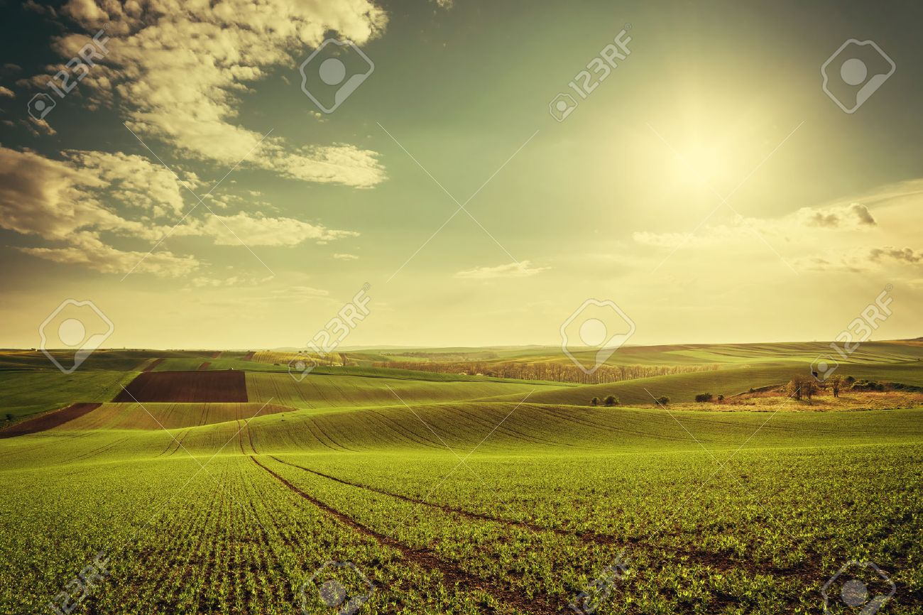 Agricultural landscape with green fields on hills and sun, vintage picture Stock Photo - 45821528