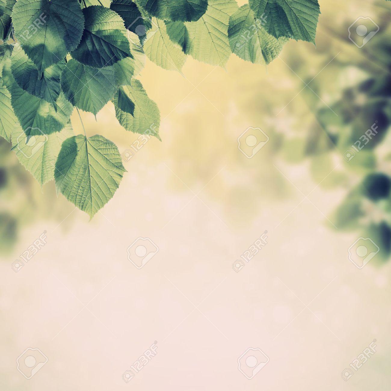 Natuur achtergronden royalty vrije foto's, plaatjes, beelden en ...