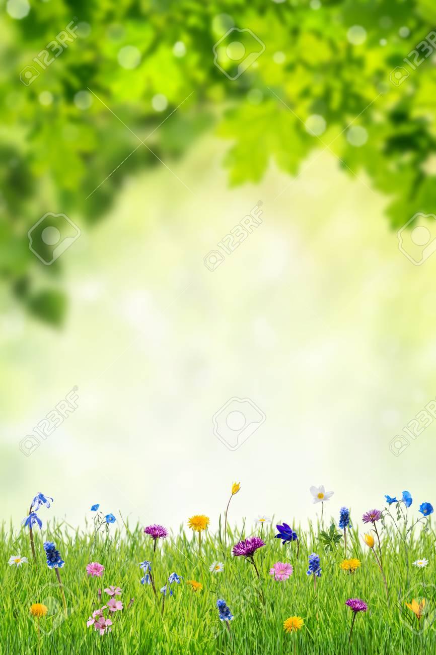 Spring Floral Wallpaper Background