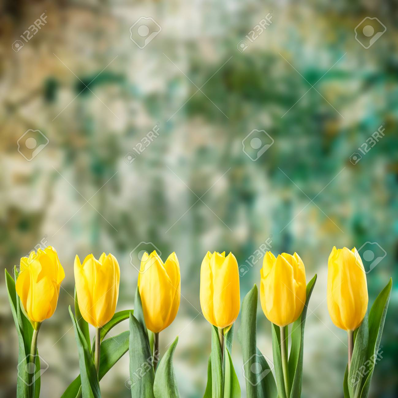 Beautiful Tulip Flowers On Grunge Background For Creative Design