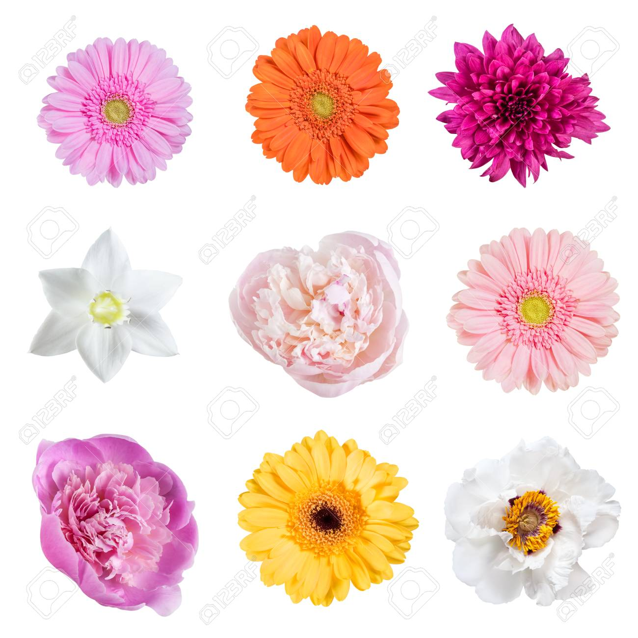 Different Beautiful Spring Flowers Isolated On White Background For