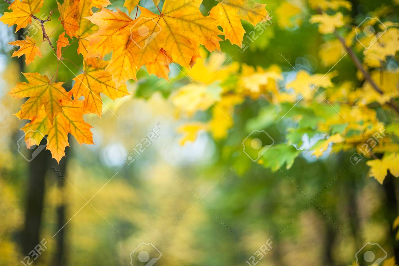 soft autumn background with bright leaves, nature wallpaper,.. stock