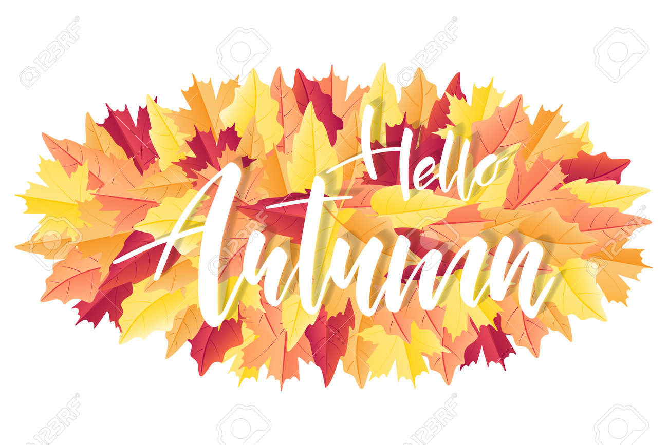 Hello Autumn brush hand lettering text for greeting card or banner on fall leaves. Modern calligraphy slogan, vector EPS 10 - 155837058
