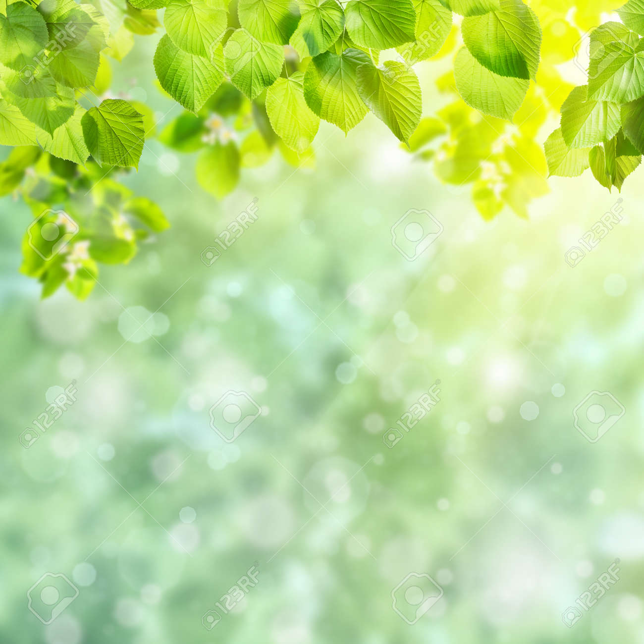 Spring green card with beautiful leaves on branch and place for your text - 165501214