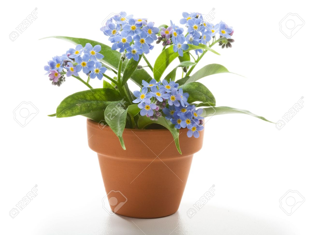 Beautiful Flower Pots - Colored, Funny, Adorable? | Hum Ideas