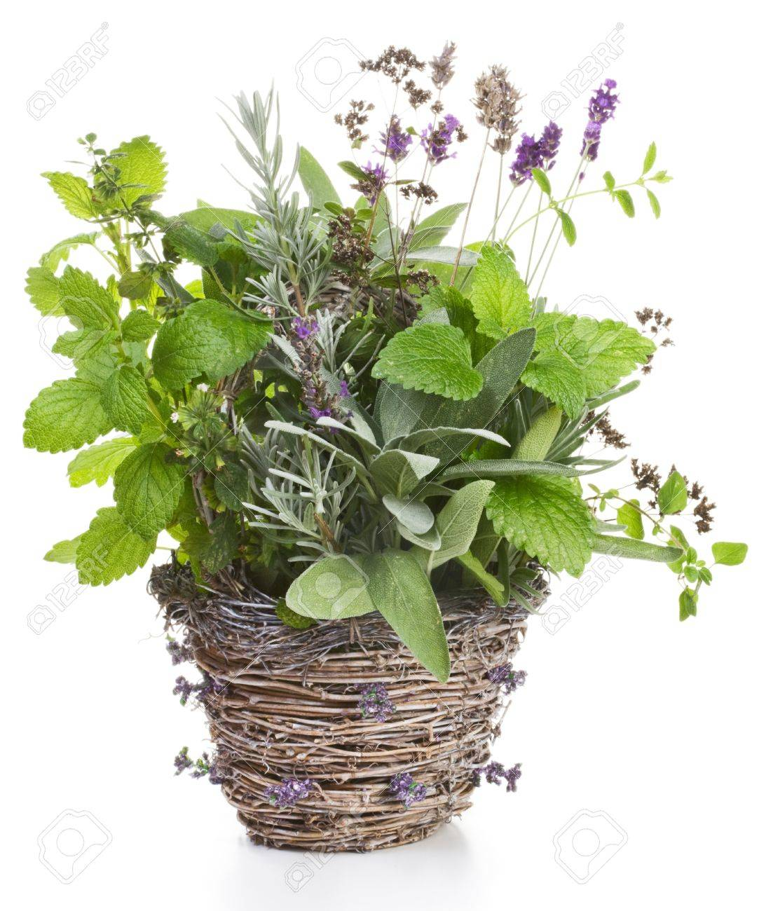 Wicker basket containing lavender, sage, lemon balm and thyme on white Stock Photo - 11272298