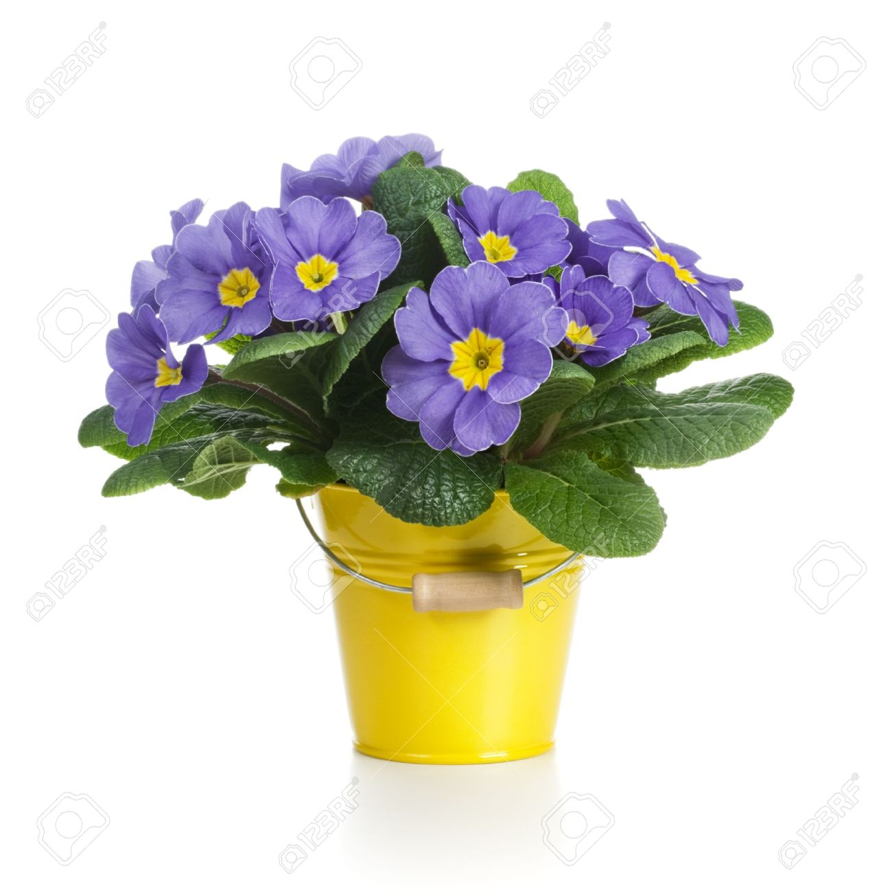 square flower pot images u0026 stock pictures royalty free square
