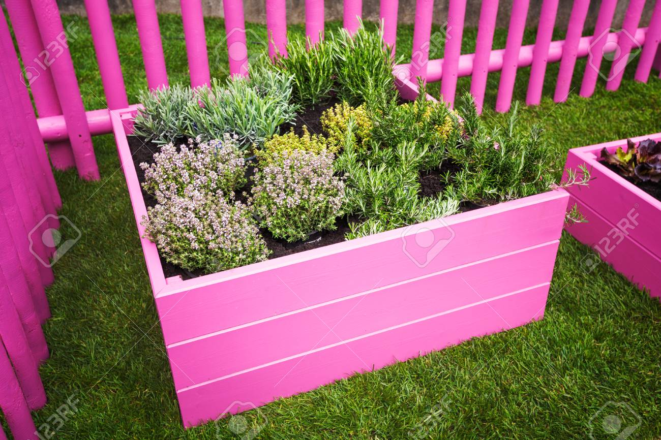 Herb Garden Pink Raised Beds With Herbs And Vegetables Stock