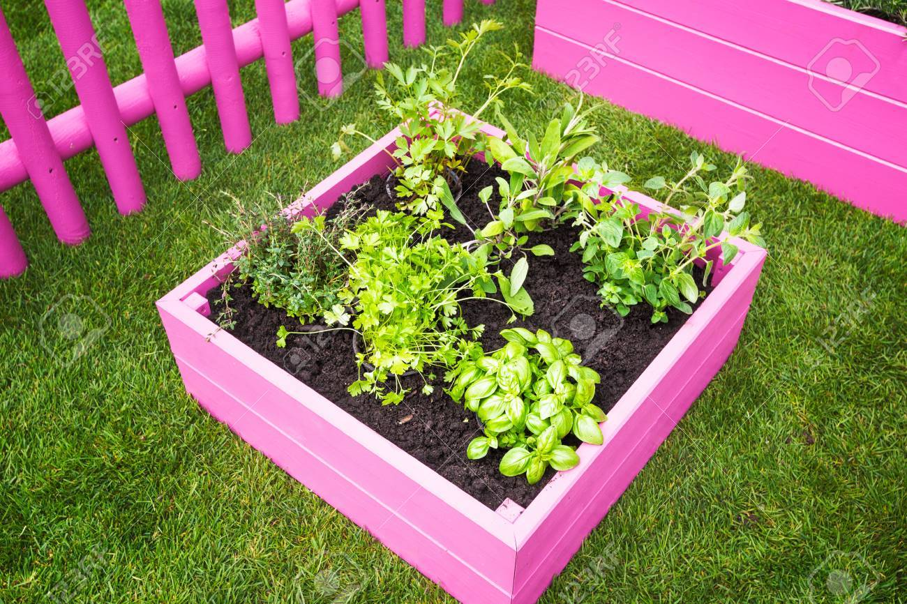 Backyard Herb Garden Pink Raised Beds With Herbs And Vegetables